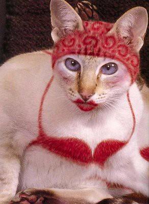 funnypaintedcats17gi9