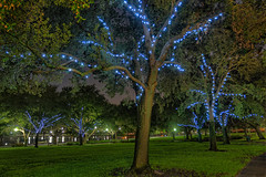 Tree lights at North Straub Park