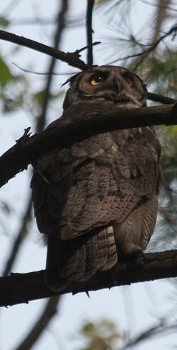 Nest owner?