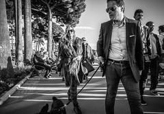 So Cannes... [Explored] (_Franck Michel_) Tags: bw pet white black fur nw noir explorer poodle blanc fourrure croisette caniche explored
