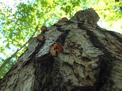(e_haya) Tags: mushroom  fujifilmxf1