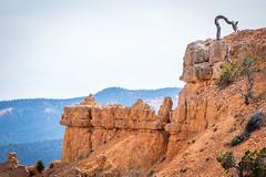 Ridgeline (Serendigity) Tags: brycecanyonnationalpark outdoors usa unitedstates landscape utah nature