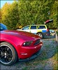 Who let the dogs out? (Papa Razzi1) Tags: 8121 2016 277365 ford volvo saab training atwork dog magda tracking autumn october xperiax