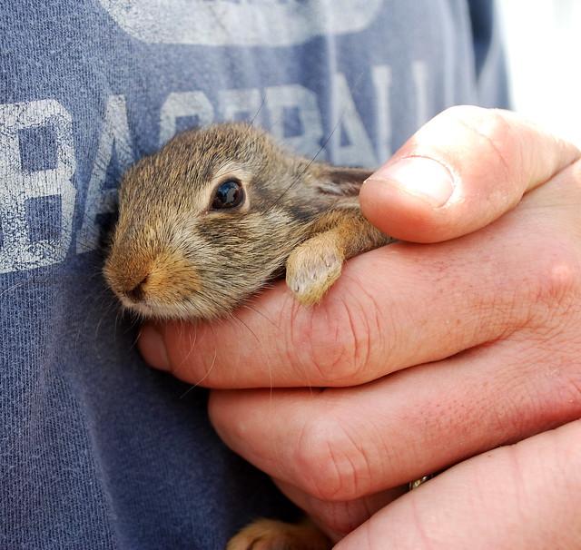 Baby bunny 4