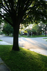 Morning tree (Nivekjeel) Tags: morning light dog tree leaves walking shining