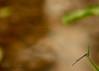 A little detail (MIRANDA, Bruno) Tags: macro sãopaulo 100mm jardimbotânico libélula f28 brunomiranda