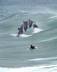 Cetacean Aviation (Bryce Bradford) Tags: california wild composite pier jumping san surf dolphin surfer wave diego olympus surfing oceanside e3 sequence zuiko 40150mm f3545