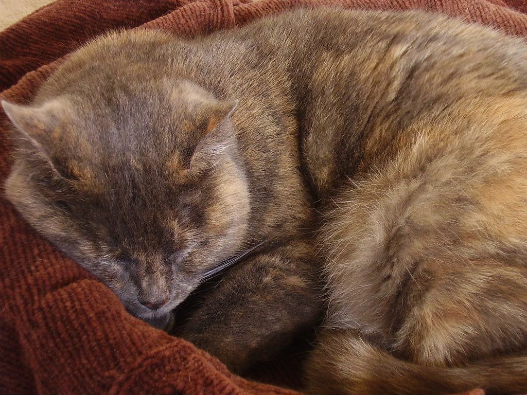 Matilda asleep.