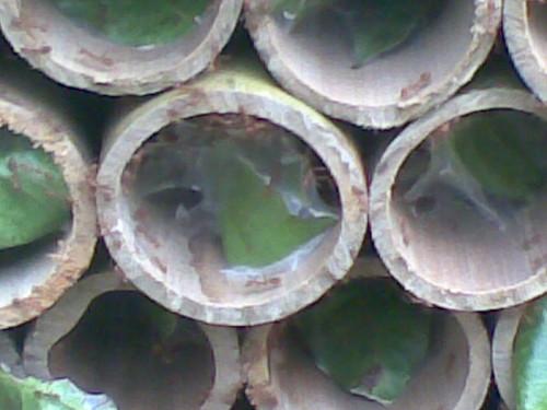 Tabung semut