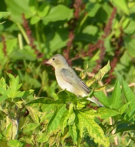 NASWC Bird Walk 145