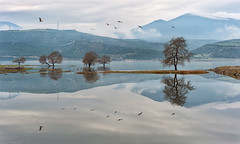 Reflections (Nick-K (Nikos Koutoulas)) Tags: lake tree fog reflections   kozani  pelecan
