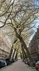 X-bomen (Nynalog) Tags: flickrchallengegroup flickrchallengewinner fotocompetitionbronze