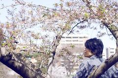 .homesick. (abnormalbeauty.) Tags: boy man flower tree cherry japanese blossom sakura hanami