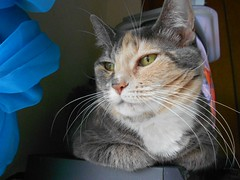I Am Beautiful (ziggywiggy1(SHELLIE B.)) Tags: cats animals cat fur kitten gato paws catscatscats cutecat prettykitty catportraits thecatsmeow beautifulcats adorablecats catfaces crazycatpeople fotocats catsupclose kissablekat kissablekats velvetpaws kissablekitties cutecatsandcuddlykittens catgatochatkatze elreydemicasa thecatsclub catsuluv catmoments furrycatfriends allcatsallowed whiskersclawsandpaws showyourcattotheworld vividcats gattorockello softballoffluff catnipaddicts furandfeatherswithattitude siamesecatsandtheirfelinebrothers catinposegattoinposa catsandkittygatosgatinhas