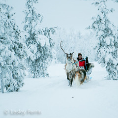 0062 (lesley v) Tags: holiday snow ice finland reindeer husky arctic northernlights auroraborealis january2013 davviarcticlodge