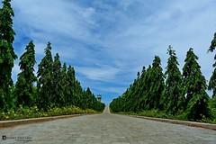 Through the green path
