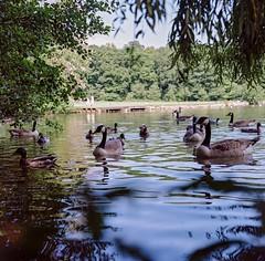 Parc de Grouchy (Martial Soula) Tags: color mamiya tlr film kodak couleurs portra argentique c3 valdoise sekor osny