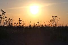 Union Beach, NJ (milicapetrovich) Tags: sunset beach reeds