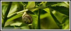 P1200048 Snail...