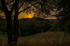 Abendruh (berndtolksdorf1) Tags: natur landschaft landscape bume wiesen hgel abendstimmung sonnenuntergang lichtstimmung