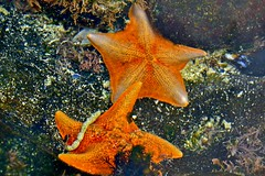 Tide-Pool Plaza (Birch Aquarium at Scripps) Tags: birchaquarium scripps starfish tidepools handson exploration marinelife tidepoolplaza seastar