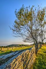 Doughton Park Landscape (esywlkr) Tags: nc wnc northcarolina bro blueridgeparkway mountains pasture landscape tree rock appalachia doughtonpark