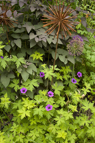geranium ann folkard clematis purpurea