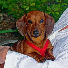 heidi casa grande arizona llgorman pet art portraits