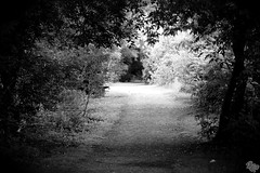 [I see through the darkness my way back home] (Dark Scene Photography) Tags: road trees light blackandwhite ontario canada leaves forest project dark noiretblanc path sony 365 dslr a500 blackwhitephotos
