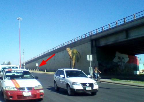 El puente de las palmeras mochas
