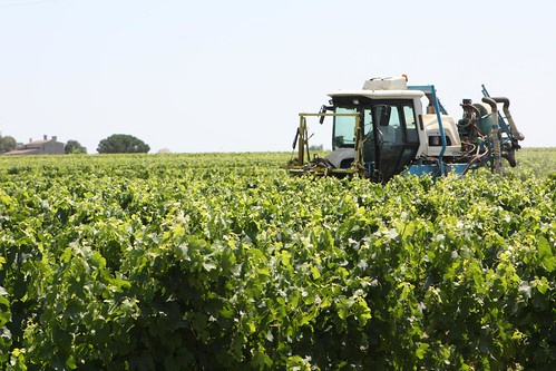 Truck in the Vineyard at Dourthe