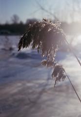 An Evening Sun (Alexey Subbotin) Tags: spring sun kieviii kodakporta160nc jupiter8m russia nature