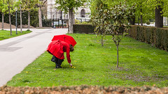 135 / 365 - another red @ Volksgarten (Matthias Obergruber Photography) Tags: vienna park street flowers trees red grass umbrella canon austria meadow streetphotography streetlife streetscene parklife redumbrella ladyinred 2470mm flowerpicking at canon5dmk2