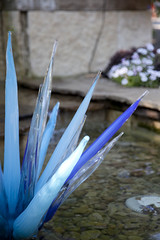 Blue Icicles (Kimburlee) Tags: flowers blue sculpture chihuly art fountain glass gardens dallas artist texas arboretum exhibit dalechihuly icicles sculptures dallasarboretum dallastexas blueicicles 66acregarden