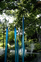 Blue Marlines and Turquoise Reeds (Kimburlee) Tags: flowers blue sculpture mist fern chihuly art glass misty gardens reeds dallas artist texas turquoise arboretum exhibit dell dalechihuly sculptures dallasarboretum dallastexas ferndell 66acregarden bluemarlinesandturquoisereeds