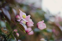 flowers 004 (EllieMooSmith) Tags: pink flowers plants white plant flower cute green nature beautiful leaves yellow garden relax spring amazing soft pretty god bokeh gardening environment f18 majestic chill majesticcasual
