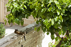 Photo (Masoud K) Tags: cat persian