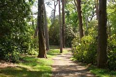 Exbury Gardens( EXPLORED) (gmj49) Tags: gardens sony exbury gmj a350