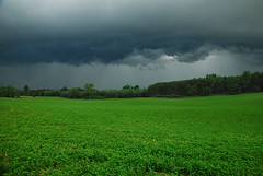 storm from the north (heinrick oldhauser) Tags: storm green field grass rain clouds dark hay alfalfa