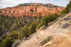 Below the Hoodoos (Serendigity) Tags: brycecanyonnationalpark trail outdoors usa unitedstates landscape utah nature