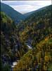 Mistra (alunfoto) Tags: bjørk geografivgs høst løvtrær natur planter sesong trær årstid