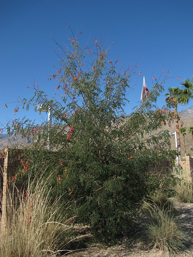 roadside bush with red seedpods