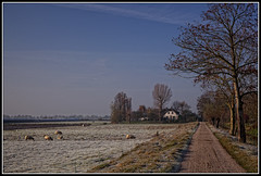 Cold Morning on the Farm (Colpics) Tags: holland zuidholland zwammerdam southholland frostylandscape canoneos5dmkii canonef2485mmusmlens