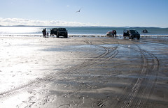 The Kiwi Life (puting bagwis) Tags: family autumn boy summer bird cars beach boats bay tracks footprints sunny beachlife kiwi deadwood throw foreground tiretracks eastersunday familytime carsonbeach kiwilife