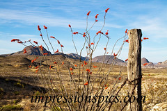 Ocotillo Mountain Scene