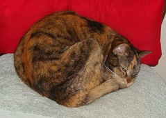 Gracie 26 March 2012 8716b 5x7b (edgarandron - Busy!) Tags: cats cute cat gracie feline tabby kitty kitties tabbies patchedtabby