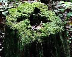 Stumpy E3 8 x 10 (Michael A Tipton) Tags: nc moss charlotte stumpy stump mcdowellpark michaelatipton