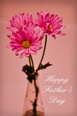 Happy Father's Day! (TrojanShooter) Tags: flowers daddy nikon flickr dad bokeh father fathersday nikkor nikondigital hcs happyfathersday d90 nikond90 trojanshooter wwwtrojanshootercom
