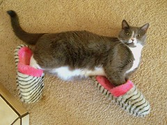 My feet are cold. (mosslanecamino) Tags: cats pets silly slippers crazyanimals