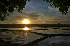 Sunset over a paddy field